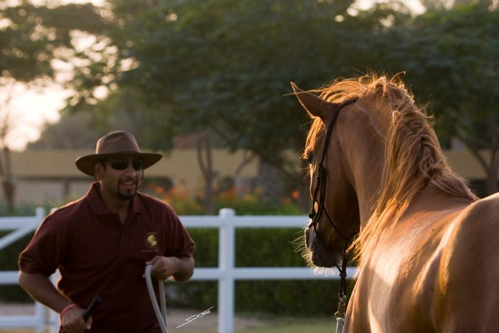 Cavago is Digitizing the World of Horses